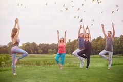 Group yoga exercise outdoor. Flock of flying birds above park lawn stock photography