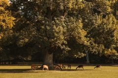 A group of young deer in autumn walks in a meadow near a forest. royalty free stock image
