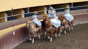 Female riders in light blue dresses royalty free stock photo