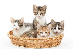 Group of young kittens in the basket Stock Photos