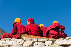 Group of young lama Royalty Free Stock Images