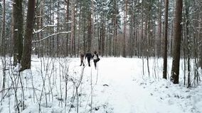 Group of young people is walking along the forest`s trail on cloudy winter day stock video