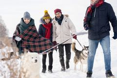 Friends Walking Dogs in Woods. Group of young people walking two gorgeous dogs on leash while enjoying nice winter day in  woods Stock Photography