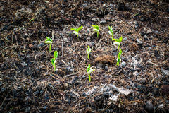 Group of young plant Royalty Free Stock Images