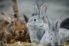 A group of young rabbits in the hutch Stock Images