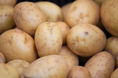 Group of young raw patatoes in peel close-up Royalty Free Stock Image