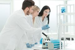Group of young scientist experimenting in the laboratory royalty free stock image