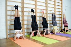 Group of young sports woman does an extension exercise at the Swedish wall Royalty Free Stock Photos