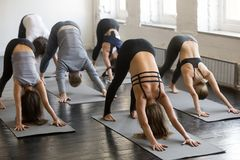 Group of young sporty people in Downward facing dog pose. Group of young sporty attractive people practicing yoga lesson with instructor, stretching in Downward royalty free stock photos