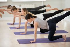 Group of young sporty people in Bird dog pose. Group of young sporty people practicing yoga lesson, doing Bird dog exercise, Donkey pose, working out, indoor royalty free stock photography