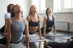Group of young sporty people in upward facing dog pose. Group of young sporty attractive people practicing yoga lesson with instructor, stretching in upward Stock Image