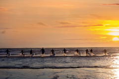 Group of young surfers on the beach, surfing Royalty Free Stock Photos