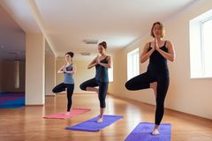 A group of young women performs asana tree of yoga royalty free stock images