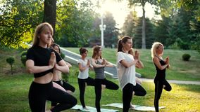 Group of young women are practicing yoga pose tree morning in park while sunrise stock footage