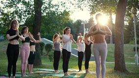 Group of young women are standing in namaste pose morning in park while sunrise. Group of people meditating under guidance of coach in slow motion. Rays of sun stock video