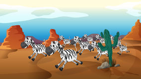 A group of zebra running at the desert Royalty Free Stock Photography