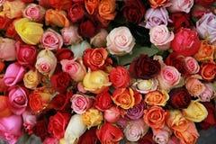 Groupe énorme de roses Image libre de droits