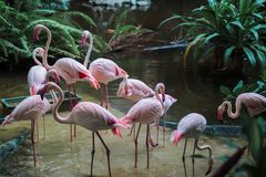 Groupe фламинго стоя в воде в джунглях стоковое фото rf