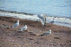 Groupe au bord du lac de mouette Photo stock