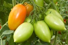 Groupe avec des tomates image libre de droits