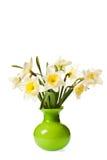 Groupe blanc de fleur de jonquille de source Images libres de droits