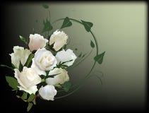 Groupe blanc de huit roses sur le fond foncé Image stock