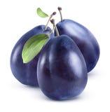 Groupe bleu de trois prunes sur le fond blanc Image stock