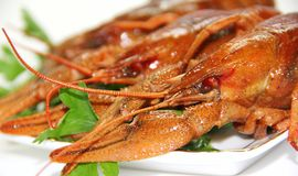 Groupe of crawfishes Royalty Free Stock Photos