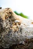 Groupe d'élevage minuscule de champignons Photographie stock