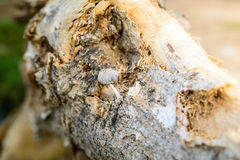 Groupe d'élevage minuscule de champignons Photos libres de droits