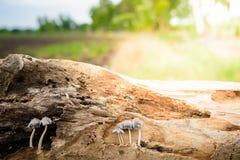 Groupe d'élevage minuscule de champignons Images stock