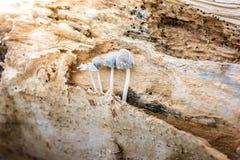Groupe d'élevage minuscule de champignons Photo stock
