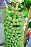 Groupe d'élevage vert de bananes Images stock