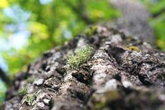 Groupe d'élevage vert doux léger de lichens de mousse Photos libres de droits