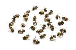 Groupe d'abeilles mortes, d'isolement images stock