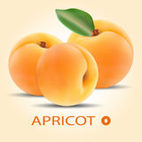 Groupe d'abricots frais avec la feuille verte Images stock