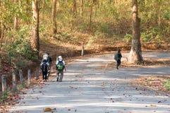 Groupe d'amis marchant avec des sacs à dos pendant la saison d'automne de forêt de l'Asie du dos Photographie stock libre de droits
