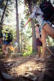 Groupe d'amis marchant ensemble dans la forêt Photos stock