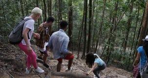 Groupe d'amis marchant par des bois sur la hausse se soutenant montant vers le bas la vue arrière arrière, trekking de personnes banque de vidéos