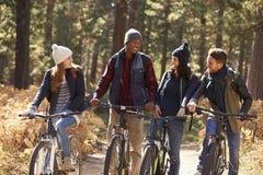 Groupe d'amis sur des vélos dans une forêt regardant l'un l'autre Image stock