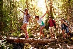 Groupe d'amis sur la promenade équilibrant sur le tronc d'arbre dans la forêt Image stock