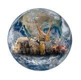 Groupe d'animal de l'Afrique avec la terre de planète Image libre de droits
