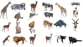 Groupe d'animaux Photo libre de droits