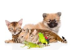 Groupe d'animaux domestiques Sur le fond blanc Image stock