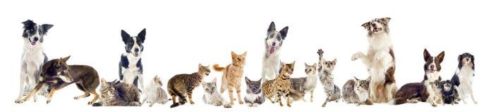 Groupe d'animaux familiers Photographie stock libre de droits