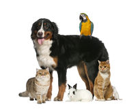 Groupe d'animaux familiers photo stock