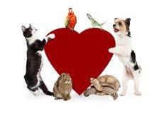 Groupe d'animaux familiers autour de coeur de valentines Images stock