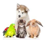 Groupe d'animaux familiers D'isolement sur le fond blanc photos libres de droits