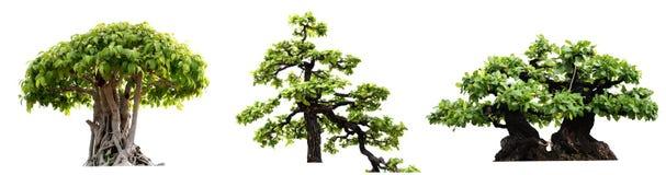 groupe d'arbre d'isolement sur le fond blanc Images libres de droits