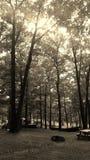 Groupe d'arbres Image libre de droits